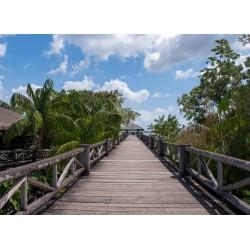 Drewniany most pośród...